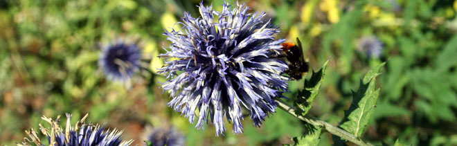 Biene-Wertschätzung.JPG