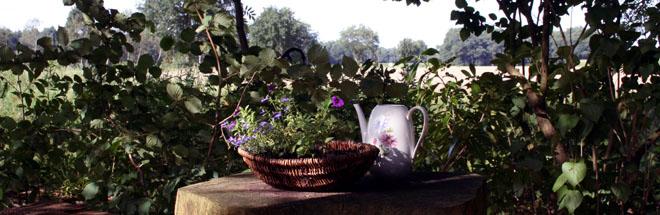 Das Bild zeigt eine Kaffeekanne aus Porzellan und ein Blumenkörbchen auf einem Holztisch in einem kleinen Wäldchen.
